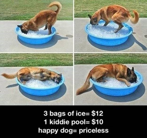 Dog laying in a kiddie swimming pool of ice